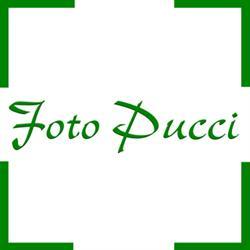 Foto Pucci Sagl
